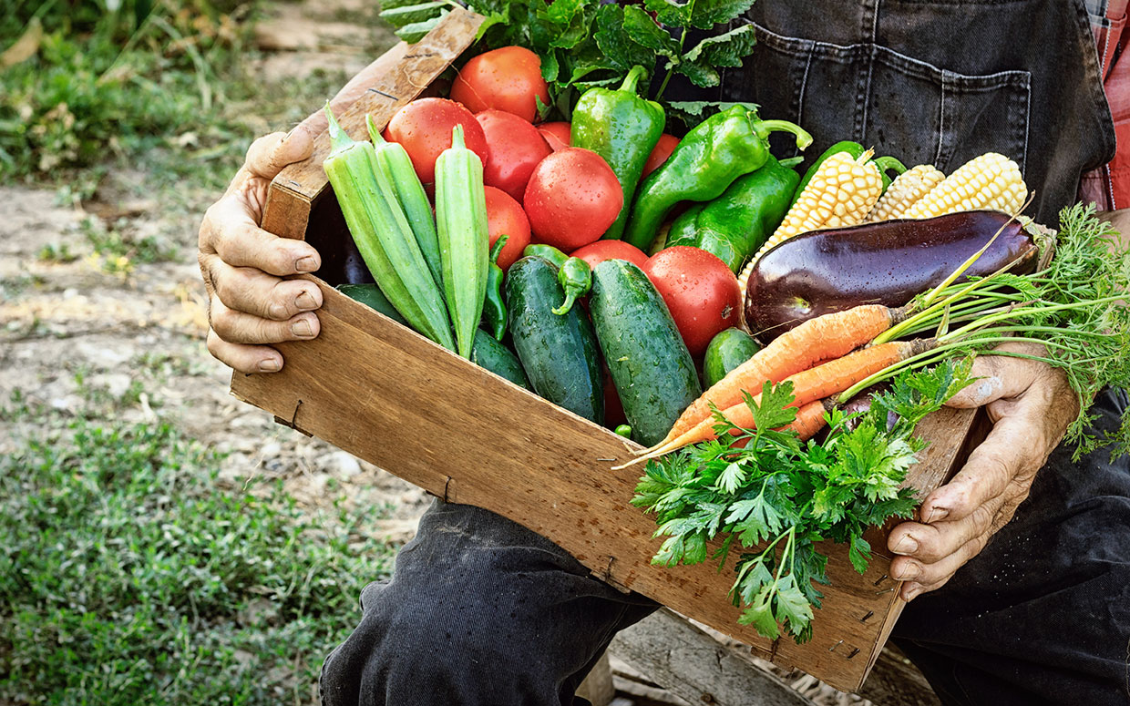 farmer-holding-csa-box